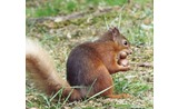 <p>You squirrel is getting greedy, Bit off more than he can chew</p>