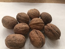 Walnuts in shell natural 5kg