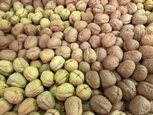 Walnuts in shell 25kg <250gm packs>  -  special - Xmas & New Year -offer price LIMITED OFFER ALSO 5kg BELOW